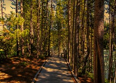 Path near the Water (victoriabrush) Tags: forest landscape path serene wyoming grandtetons
