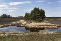 T2-Pool Landscape (Bugbait of Seney) Tags: landscape michigan dry upperpeninsula beaverlodge drained snwr seneynationalwildliferefuge t2pool