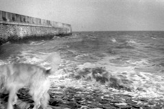 April (dockerm) Tags: sea dog black animals analog see blackwhite april jahr