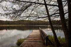 Deck with the reflection (modestmoze) Tags: park travel blue trees sky plants white lake black reflection green nature wet water beautiful grass clouds forest outside outdoors wooden spring warm day shadows view natural branches may sunny fresh deck treeline planks 2016 500px