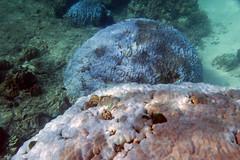 IMG_3767oa (www.linvoyage.com) Tags: sea thailand island sailing yacht corals racha        deadcorals