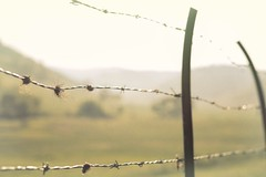 Because I love this, I am never bored (Tracey Rennie) Tags: sunlight fence spring alberta barbedwire backlit rumi