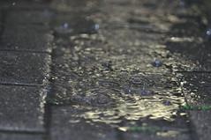 rain in the evening (nirak68) Tags: rain puddle deutschland regen bahnsteig ger pftze eutin 167366 schleswigholsteinkreisostholstein 2016ckarinslinsede