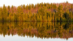 """And the evenin' is nigh ... "" (Canadapt) Tags: trees lake reflection pine forest mirror spring image calm birch keefer canadapt"