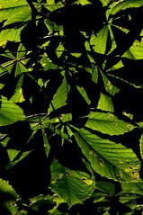 wawmorning180616_6936 (Tomasz Urbaszek) Tags: sunrise warsaw chestnut