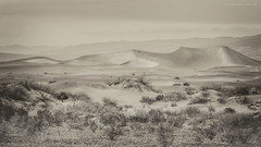 Sand dunes in sepia (Jodi Newell) Tags: california travel people nature canon landscape nationalpark sand dunes deathvalley wildflowers february sanddunes vast 2016 superbloom jodinewell jodisjourneys wildflowersuperbloom jodisjourneysphotosgmailcom