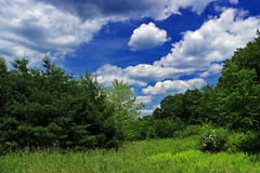 Hagerman Run Road (1) (Nicholas_T) Tags: trees summer sky nature field grass clouds pennsylvania meadow cumulus creativecommons endlessmountains loyalsockstateforest lycomingcounty hagermanrunroad