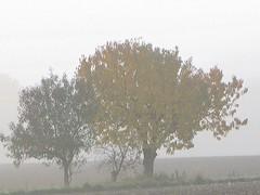 O Vater, allmchtiger Gott (amras_de) Tags: mist tree fog nebel tr boom arbor nebula ceo rbol sis nebbia albero tre puu arbre rvore strom niebla baum brouillard arbo fa trd tr tke mgla dimma tge kd nevoeiro koks boira sumu drvo udu drzewo medis arbore aga stablo nebulo zuhaitz magla crann oka megla drevo mlha laino hmla migla rukas boirabaixa negghia nbla rvulu