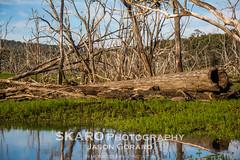 Harvey Dam in Winter (Jason Gorard) Tags: winter mud dam perth harvey westernaustralia deadtrees watergreen harveydam