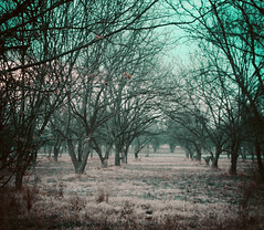 A Memory (RaquelMannes) Tags: nature forest path