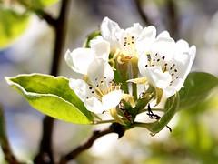 Soria_0033 (Joanbrebo) Tags: flowers flores fleur blossom blumen fiori soria flors autofocus castillaylen efs18135mmf3556is canoneos70d