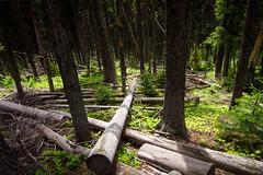 Fallen (leah.kling) Tags: wood trees canada mountains tree green grass forest landscape outside creative hike alpine alberta waterton