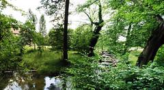 Reviere Lanke und Prenden Sommer 2016  Fischtreppe (Forstamt Pankow / Berliner Forsten) Tags: flora wasser wolken sonne faun wasserpflanzen berlinerforsten forstamtpankow revierlankeprenden