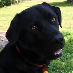 Pedro occhi dolci  #mydog #occhidolci #instadog #family #familytime #bestdog #dog #dogs #nofilter (Elena Dotti) Tags: dog square squareformat mydog bestdog occhidolci iphoneography instagramapp uploaded:by=instagram