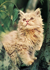 Cat (Steenvoorde Leen - 1.8 ml views) Tags: cats cat chat pussy katze puss pussycat poes kater mieze