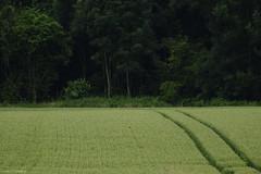 [ 365 | 186 ] (frau_k) Tags: trees green field 186 gras 365 ootb