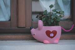 Untitled (Daphne Wolfsong) Tags: life street pink stilllife plants plant cute love window rural vintage mouse countryside still heart sweet object ivy pale retro indie