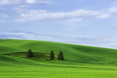 wheat field (3dRabbit) Tags: palouse wa wheat field sungjinahn landscape nature wallpaper green color blue 135mm canon tree curve clouds outdoor glass plant hill hills concept