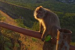 DSC02480 (Peripatete) Tags: bali mountains nature sunrise landscape volcano mount monkeys batur
