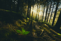 Fairytale Forest (NIOphoto.) Tags: wood sun green fairytale forest sunrise golden moss nikon warm dream tokina fairy hour rays wald madeira d5200