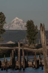 Mt. Hood (www.jakelewisphotography.com) Tags: sunset water dock pier moutains mthood tree