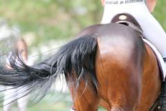 IMG_3236 (dreiwn) Tags: horse pony horseshow pferde pferd equestrian horseback reiten horseriding showjumping dressage reitturnier dressur reitsport dressyr ilsfeld dressuur ridingclub junioren ridingarena pferdesport springreiten reitplatz reitverein dressurreiten dressurpferd dressurprfung tamronsp70200f28divcusd jugentturnier