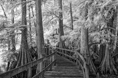 Welcome (John C. House) Tags: blackandwhite monochrome lowlight nikon tennessee d70s infrared boardwalk nik cypress reelfootlake everydaymiracles johnchouse eresti