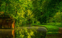 Lush Summer Foliage (williamrandle) Tags: uk trees summer england plant reflection tree green water landscape canal nikon sandstone quiet outdoor peaceful serene lush staffordshire westmidlands towpath kinver stourton 2016 staffordshireworcestershirecanal d7100 tamron2470f28vc