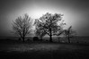 A Trio of Trees (vulture labs) Tags: triooftrees vulturelabs