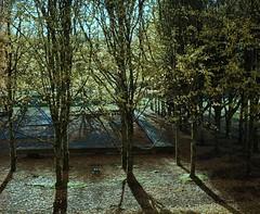 Academic Quadrangle Beech Trees (jvde) Tags: burnaby coolscan film fujicolor nikon nikonfe sfu 3570mmf3345nikkor gimp