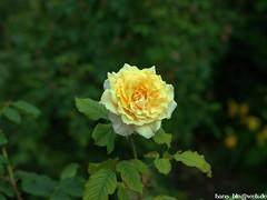 L_000317 (hans03) Tags: blumen blüte gärten der welt berlin berlinmarzahn