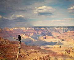 Grand Canyon (Violet Kashi) Tags: light arizona sky color bird clouds landscape us shadows grandcanyon crow raven geologic