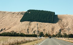 Banks Peninsula square forest of squareness (bichane) Tags: trees newzealand lines forest square hill block straight hillside bankspeninsula