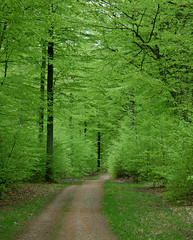 Beech wood in May (Ingrid0804) Tags: denmark vanishingpoint gribskov greenforest walkinginbeauty forestwanderer beechwoodspringforestwoodpathgreenfresh thebeautifulmonthofmay