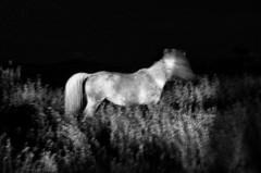 IMGP4011-stavrosstam (stavrosstam) Tags: bw horse night thelittledoglaughed ldlnoir ofportalsandparallelworlds