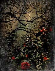 Springtime Colors on Holy Ground:  Calvary Episcopal Church (1859) and Churchyard, Tarboro, Edgecombe County, North Carolina (EdgecombePlanter) Tags: light shadow texture church religious nc moody azaleas south religion gothic northcarolina historic southern mystical dag tombstones antebellum magical tarboro textured revival camellias edgecombe