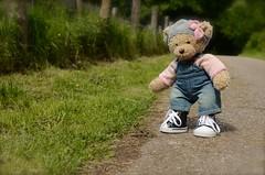 Am Wildschweingehege16/365 (Lenekie) Tags: bear toy teddy curly build leni buildabear bar teddybar krausebar