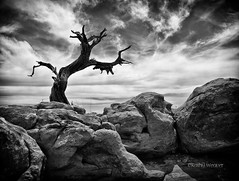 The Tree (kweaver2) Tags: sky nature monochrome clouds landscape photography utah nationalpark canyonlands fineartphotography naturephotography kathyweaver
