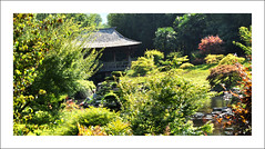 Bambouseraie de Prafrance (Cévennes) (sudfrance30) Tags: jean jardin du bouddha bamboo des national zen parc sequoia bambou gard languedocroussillon alès anduze bambouseraie lozère cévennes bambous prafrance générargues parcnationaldescévennes filou30 vallondudragon sudfrance30 cévennesgardonlaoslaotienvallon