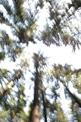 Abstract trees above me (romizaj) Tags: wood trees abstract tree green nature landscape day sigma bio fresh trunk eco spruce icm foveon dp1 intentionalcameramovement