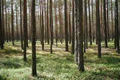 Hiking (Stefan Buhrmann) Tags: trees green film forest kodak latvia konica af portra hexar
