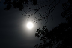 Moonlight through the Mist (Truebritgal) Tags: moon tree nature leaves silhouette night dark lens nikon branch bright branches astro nighttime moonlight nikkor lunar 18200mm naturalbw d7000 truebritgal