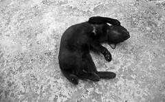 si rimau berguling guling (PieceOfMindArt) Tags: animal cat nikon coolpix s3000