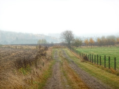 Field in the fog. (Bessula) Tags: autumn tree fall nature field fog rural forest landscape sweden path country bessula creativemindsphotography slicesoftime