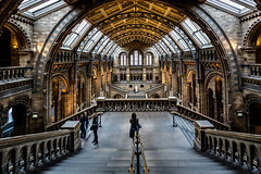 London Natural History Museum (LeePellingPhotography.co.uk) Tags: brick london history stone museum architecture stairs natural gargoyles