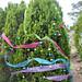 Trees_of_Loop_360_2013_082