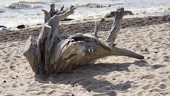 _8040083 (Oryugami) Tags: sea beach nature sand shore stump