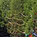 Trees_of_Loop_360_2013_209
