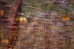 Breeze (James Milstid) Tags: autumn motion blur tree fall rain movement raindrops breeze mothernature