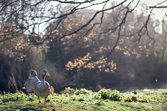 St Jame's Park IV (Pazeditions) Tags: park uk family england horse london st portraits canon james squirrel 85mm ducks parade tokina 5d 28 guards 18 mk3 1116mm